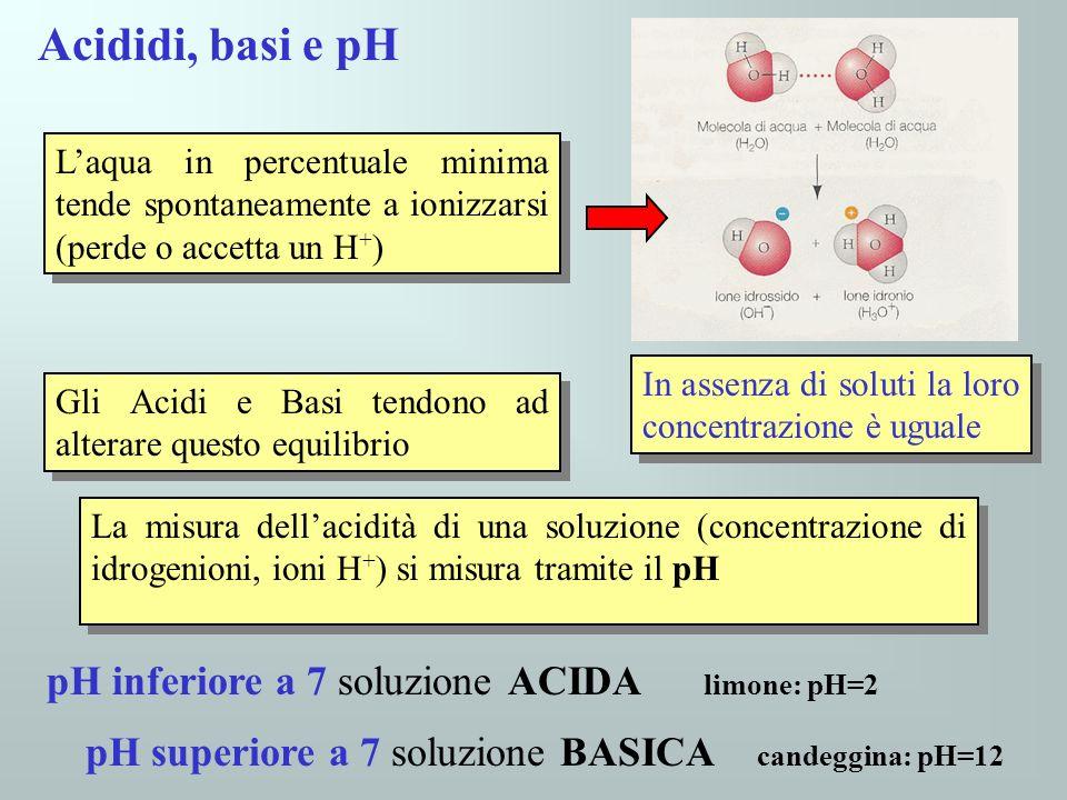 Acididi, basi e pH Laqua in percentuale minima tende spontaneamente a ionizzarsi (perde o accetta un H + ) Gli Acidi e Basi tendono ad alterare questo