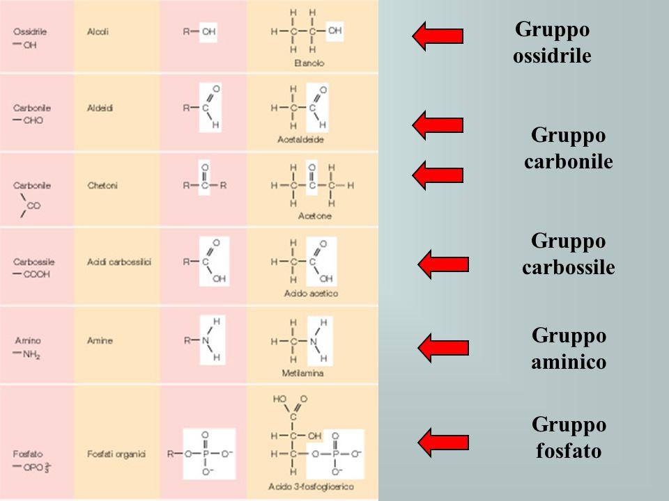 Gruppo ossidrile Gruppo carbossile Gruppo aminico Gruppo fosfato Gruppo carbonile