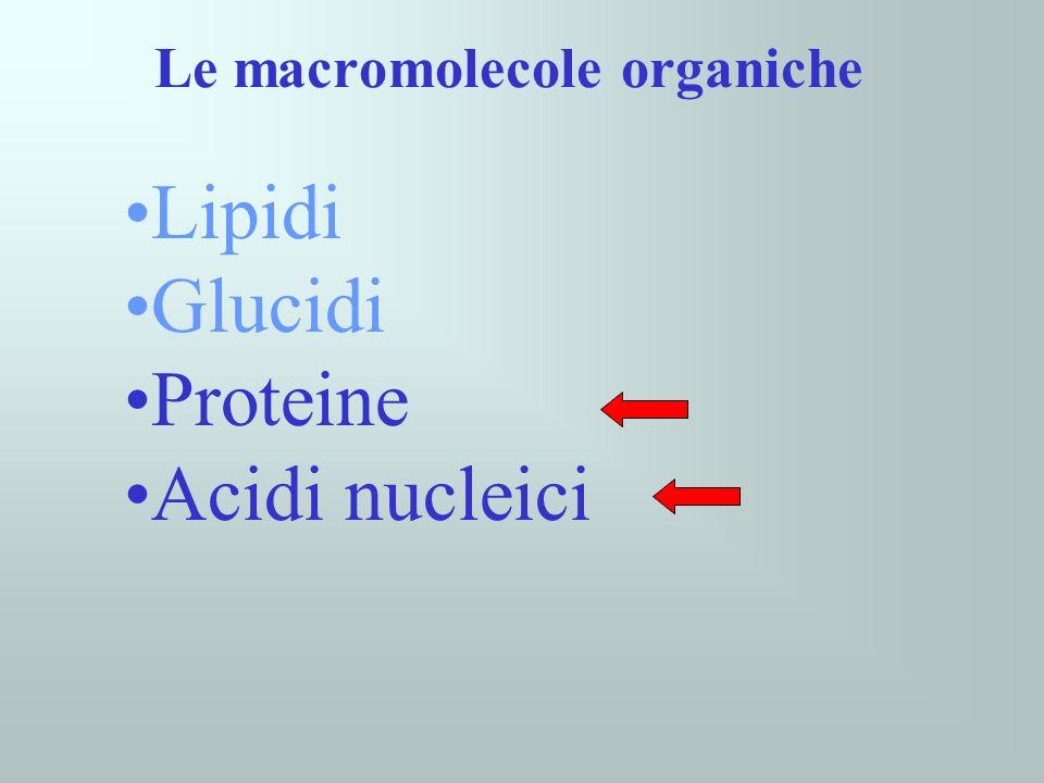 Le macromolecole organiche Lipidi Glucidi Proteine Acidi nucleici