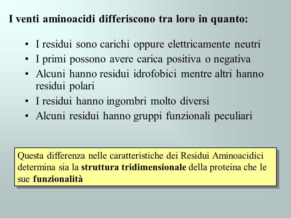 I venti aminoacidi differiscono tra loro in quanto: I residui sono carichi oppure elettricamente neutri I primi possono avere carica positiva o negati
