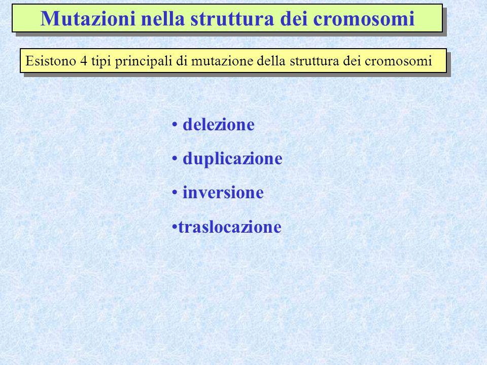 Mutazioni nella struttura dei cromosomi Esistono 4 tipi principali di mutazione della struttura dei cromosomi delezione duplicazione inversione traslo