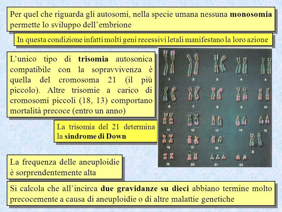Per quel che riguarda gli autosomi, nella specie umana nessuna monosomia permette lo sviluppo dellembrione In questa condizione infatti molti geni rec