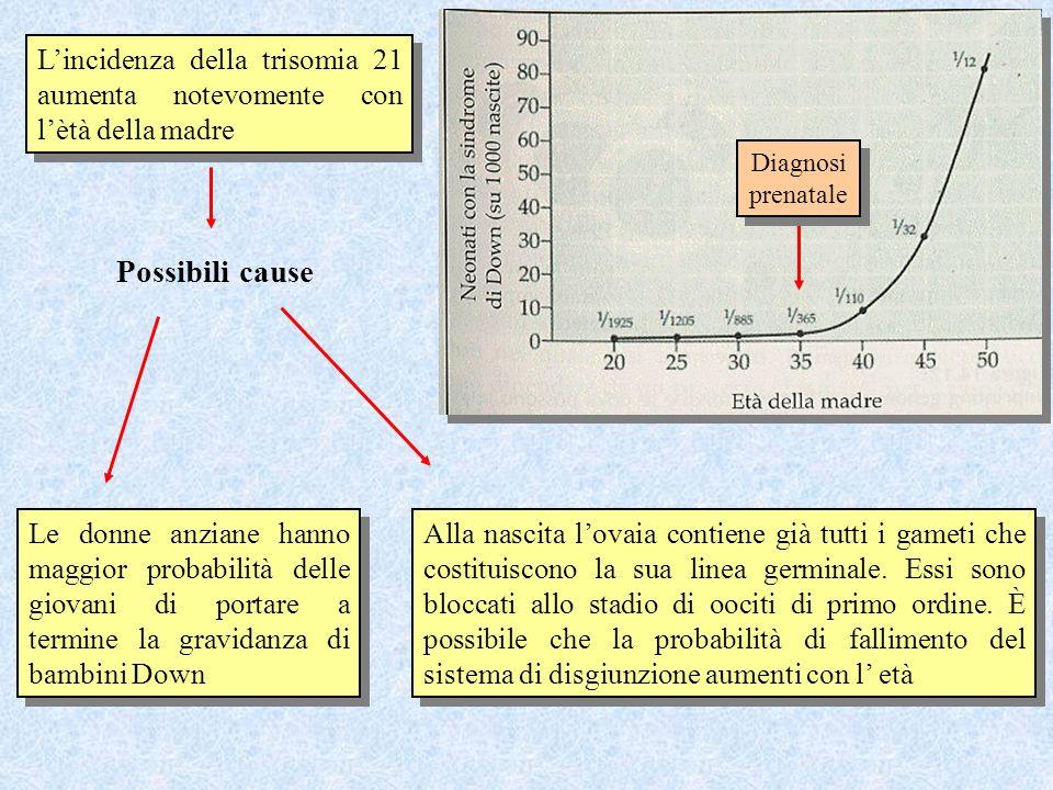 Lincidenza della trisomia 21 aumenta notevomente con lètà della madre Possibili cause Le donne anziane hanno maggior probabilità delle giovani di port