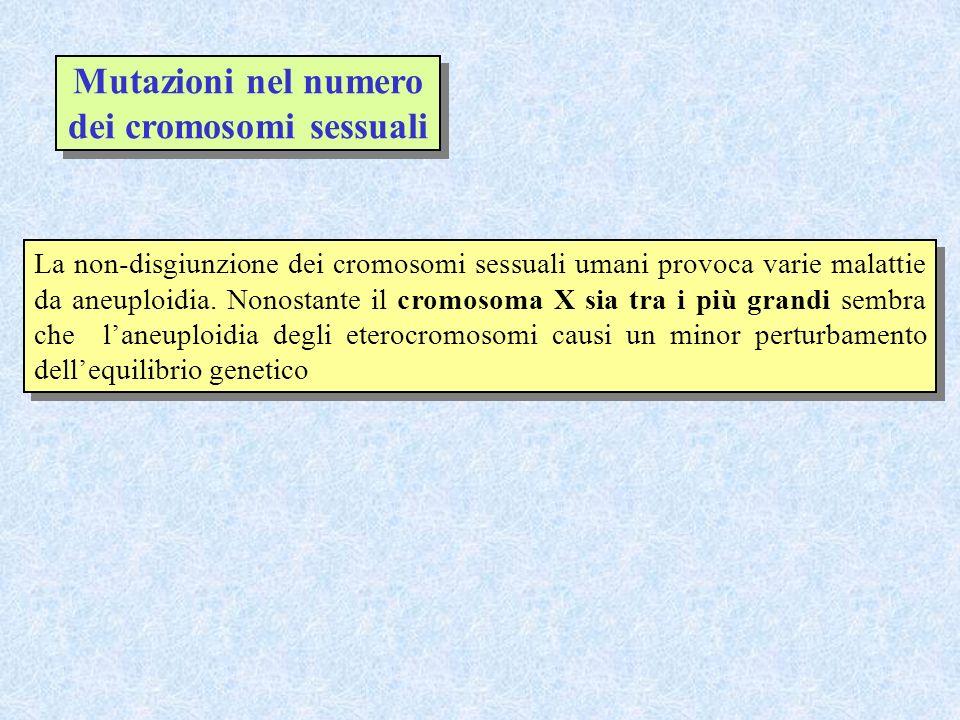 Mutazioni nel numero dei cromosomi sessuali La non-disgiunzione dei cromosomi sessuali umani provoca varie malattie da aneuploidia. Nonostante il crom