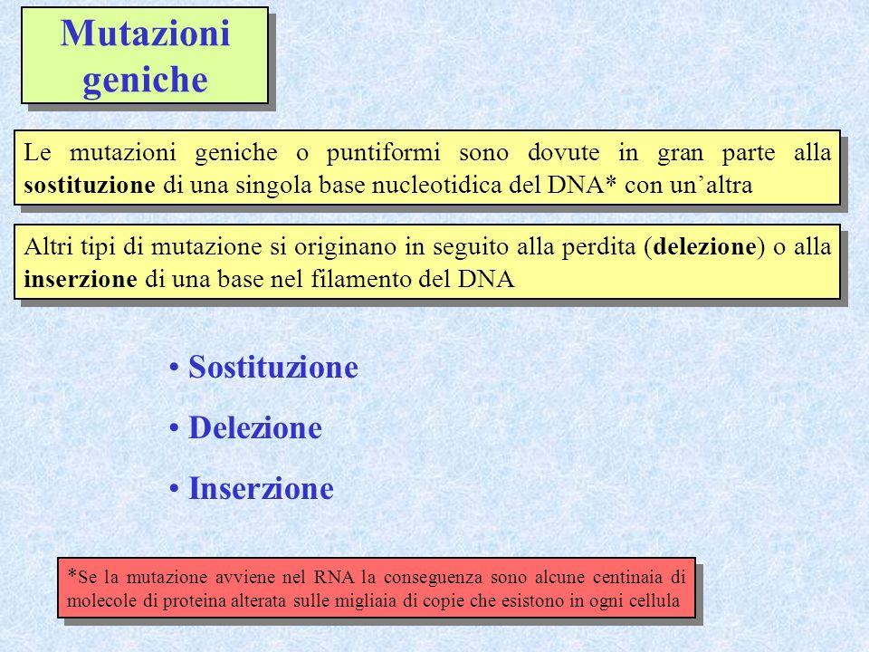 Mutazioni geniche Le mutazioni geniche o puntiformi sono dovute in gran parte alla sostituzione di una singola base nucleotidica del DNA* con unaltra