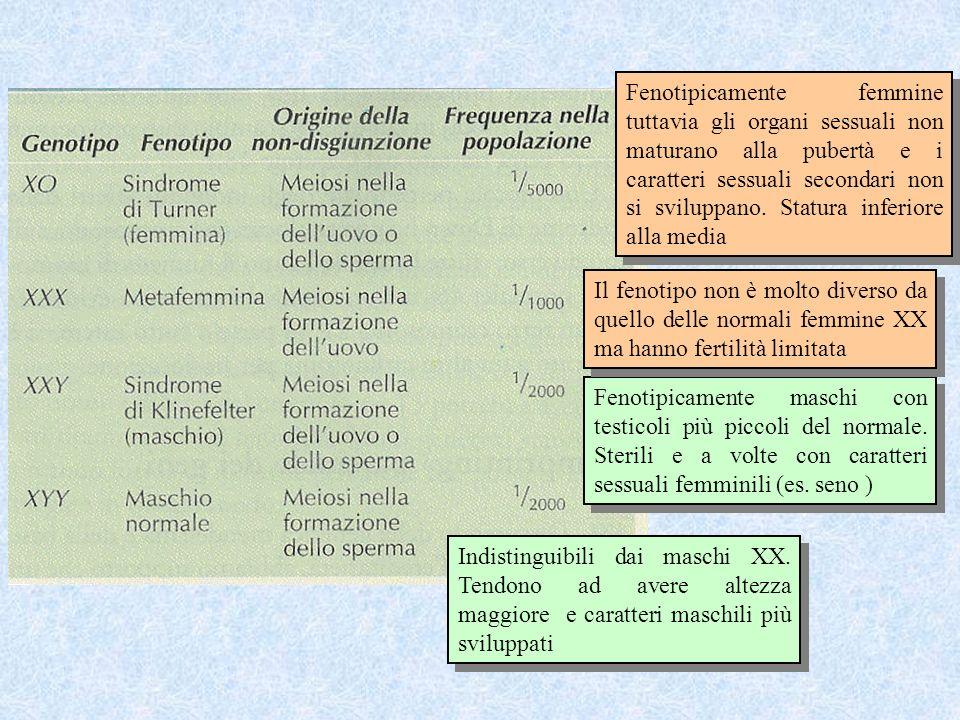 Fenotipicamente maschi con testicoli più piccoli del normale. Sterili e a volte con caratteri sessuali femminili (es. seno ) Indistinguibili dai masch