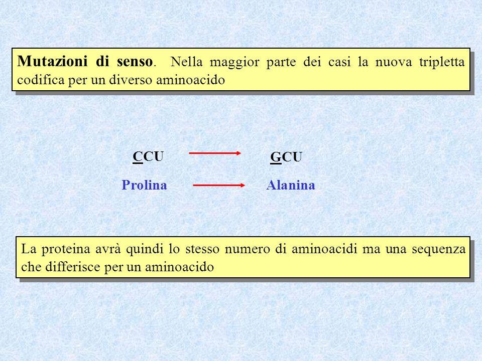 Mutazioni di senso. Nella maggior parte dei casi la nuova tripletta codifica per un diverso aminoacido CCU GCU ProlinaAlanina La proteina avrà quindi