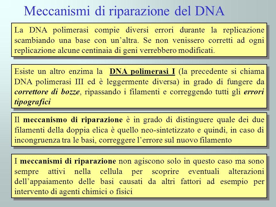 La DNA polimerasi compie diversi errori durante la replicazione scambiando una base con unaltra.