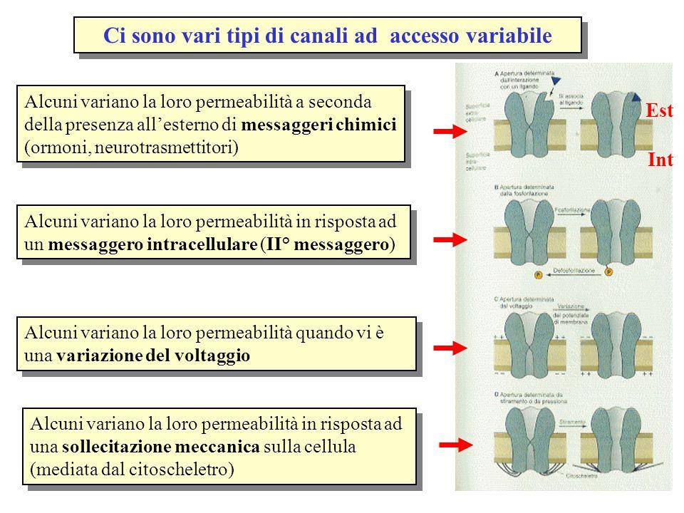 Ci sono vari tipi di canali ad accesso variabile Alcuni variano la loro permeabilità a seconda della presenza allesterno di messaggeri chimici (ormoni