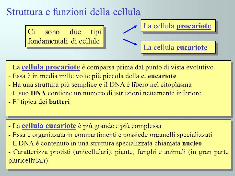 Struttura e funzioni della cellula Ci sono due tipi fondamentali di cellule - La cellula procariote è comparsa prima dal punto di vista evolutivo - Es
