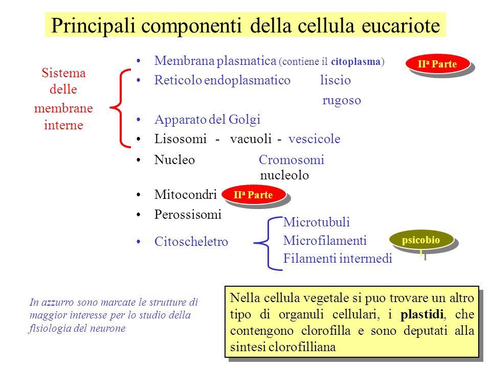Principali componenti della cellula eucariote Membrana plasmatica (contiene il citoplasma) Reticolo endoplasmatico liscio rugoso Apparato del Golgi Li