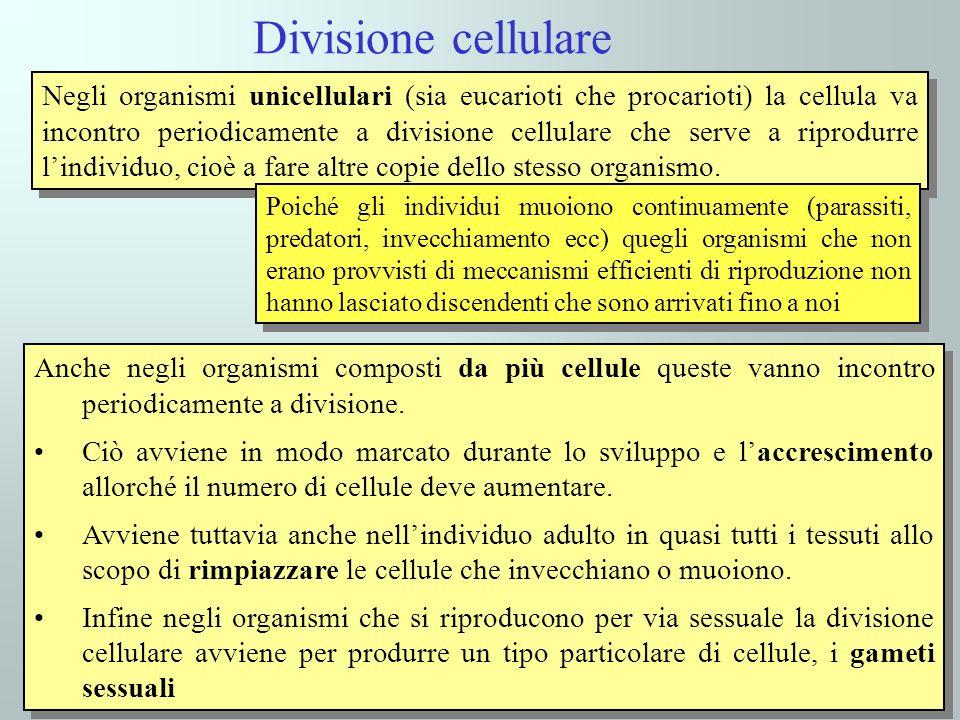 Divisione cellulare Negli organismi unicellulari (sia eucarioti che procarioti) la cellula va incontro periodicamente a divisione cellulare che serve