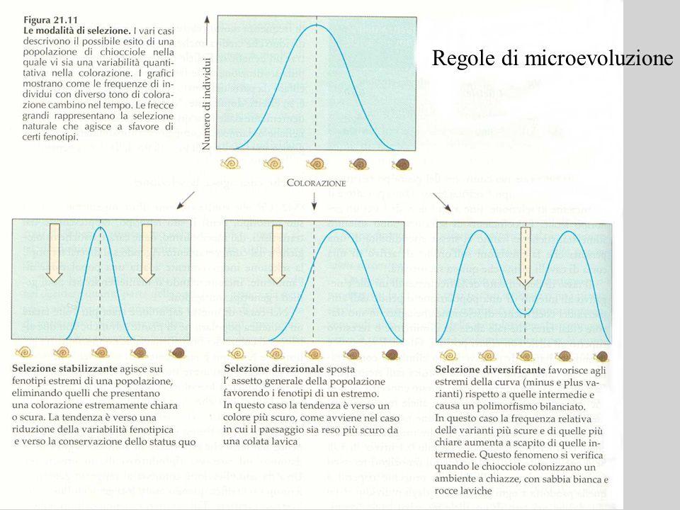 Regole di microevoluzione