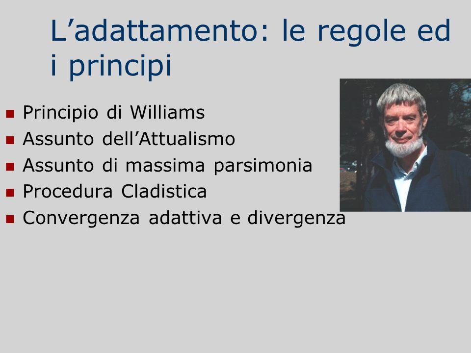 Ladattamento: le regole ed i principi Principio di Williams Assunto dellAttualismo Assunto di massima parsimonia Procedura Cladistica Convergenza adat