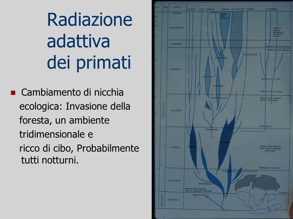 Radiazione adattiva dei primati Cambiamento di nicchia ecologica: Invasione della foresta, un ambiente tridimensionale e ricco di cibo, Probabilmente