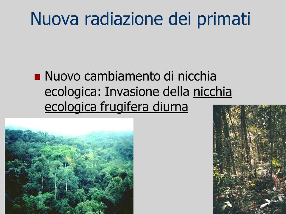 Nuova radiazione dei primati Nuovo cambiamento di nicchia ecologica: Invasione della nicchia ecologica frugifera diurna