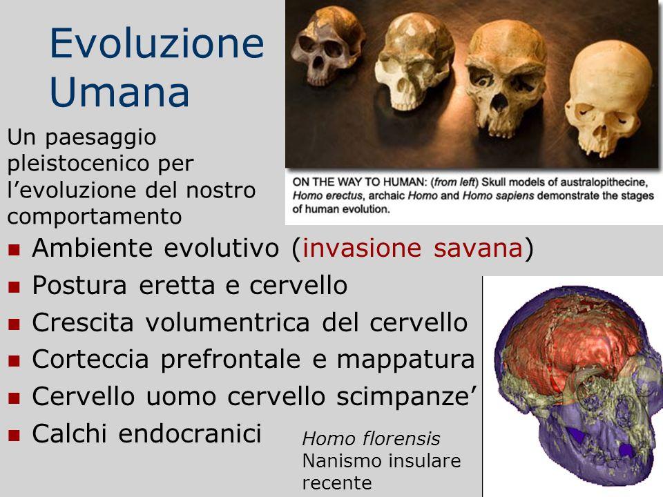 Evoluzione Umana Ambiente evolutivo (invasione savana) Postura eretta e cervello Crescita volumentrica del cervello Corteccia prefrontale e mappatura