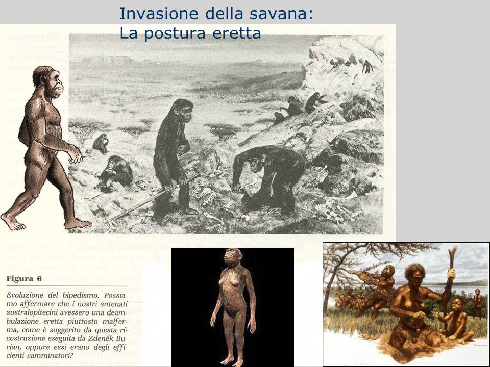 Postura eretta Invasione della savana: La postura eretta