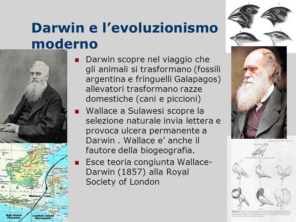 Darwin e levoluzionismo moderno Darwin scopre nel viaggio che gli animali si trasformano (fossili argentina e fringuelli Galapagos) allevatori trasfor
