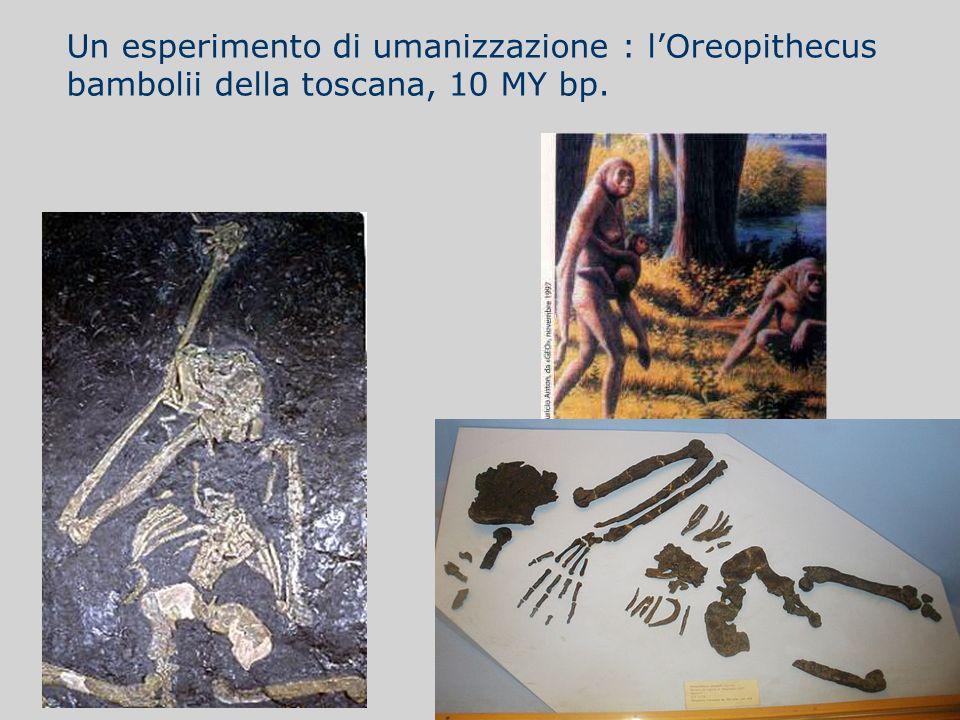 Un esperimento di umanizzazione : lOreopithecus bambolii della toscana, 10 MY bp.