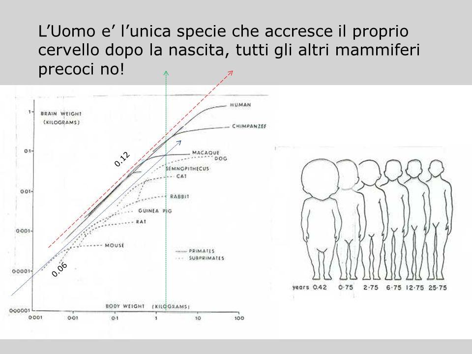 LUomo e lunica specie che accresce il proprio cervello dopo la nascita, tutti gli altri mammiferi precoci no! 0.12 0.06