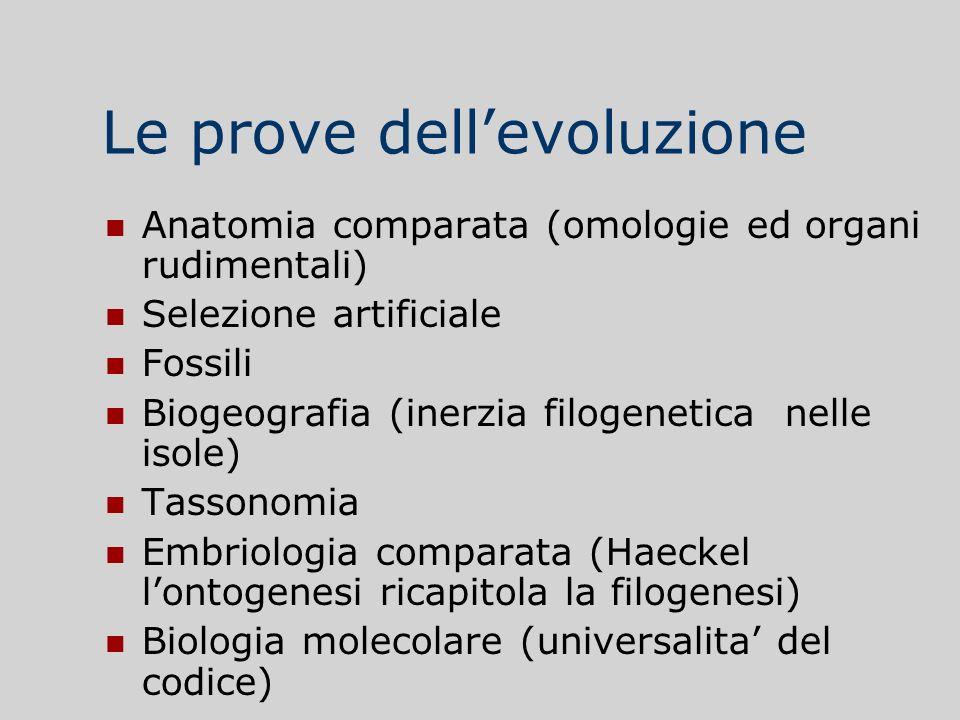 Le prove dellevoluzione Anatomia comparata (omologie ed organi rudimentali) Selezione artificiale Fossili Biogeografia (inerzia filogenetica nelle iso