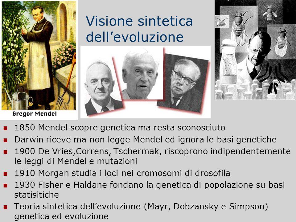 Visione sintetica dellevoluzione 1850 Mendel scopre genetica ma resta sconosciuto Darwin riceve ma non legge Mendel ed ignora le basi genetiche 1900 D
