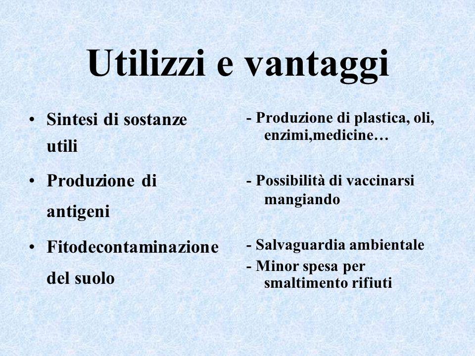 Utilizzi e vantaggi Sintesi di sostanze utili Produzione di antigeni Fitodecontaminazione del suolo - Produzione di plastica, oli, enzimi,medicine… -