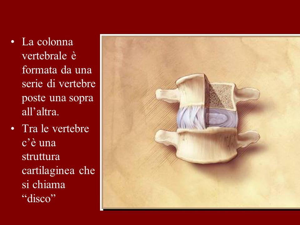 La colonna vertebrale è formata da una serie di vertebre poste una sopra allaltra. Tra le vertebre cè una struttura cartilaginea che si chiama disco