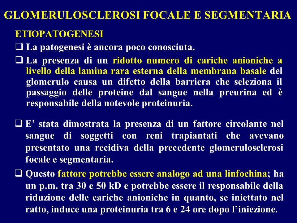GLOMERULOSCLEROSI FOCALE E SEGMENTARIA ETIOPATOGENESI La patogenesi è ancora poco conosciuta. La presenza di un ridotto numero di cariche anioniche a