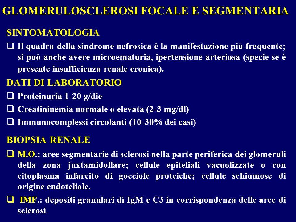 SINTOMATOLOGIA Il quadro della sindrome nefrosica è la manifestazione più frequente; si può anche avere microematuria, ipertensione arteriosa (specie