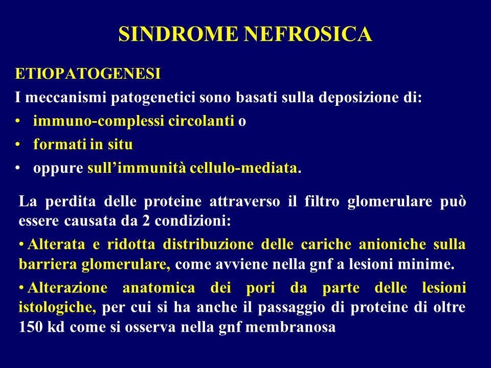 SINDROME NEFROSICA ETIOPATOGENESI I meccanismi patogenetici sono basati sulla deposizione di: immuno-complessi circolanti o formati in situ oppure sul