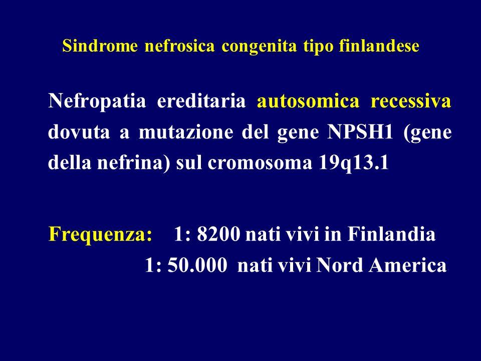 Sindrome nefrosica congenita tipo finlandese Nefropatia ereditaria autosomica recessiva dovuta a mutazione del gene NPSH1 (gene della nefrina) sul cro