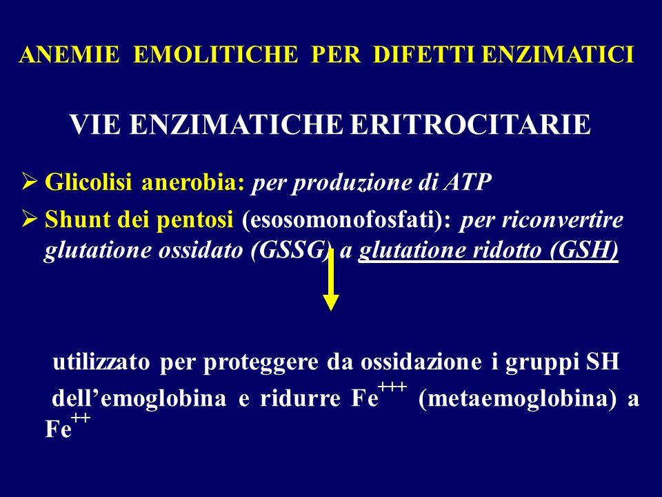 ANEMIE EMOLITICHE PER DIFETTI ENZIMATICI VIE ENZIMATICHE ERITROCITARIE Glicolisi anerobia: per produzione di ATP Shunt dei pentosi (esosomonofosfati):