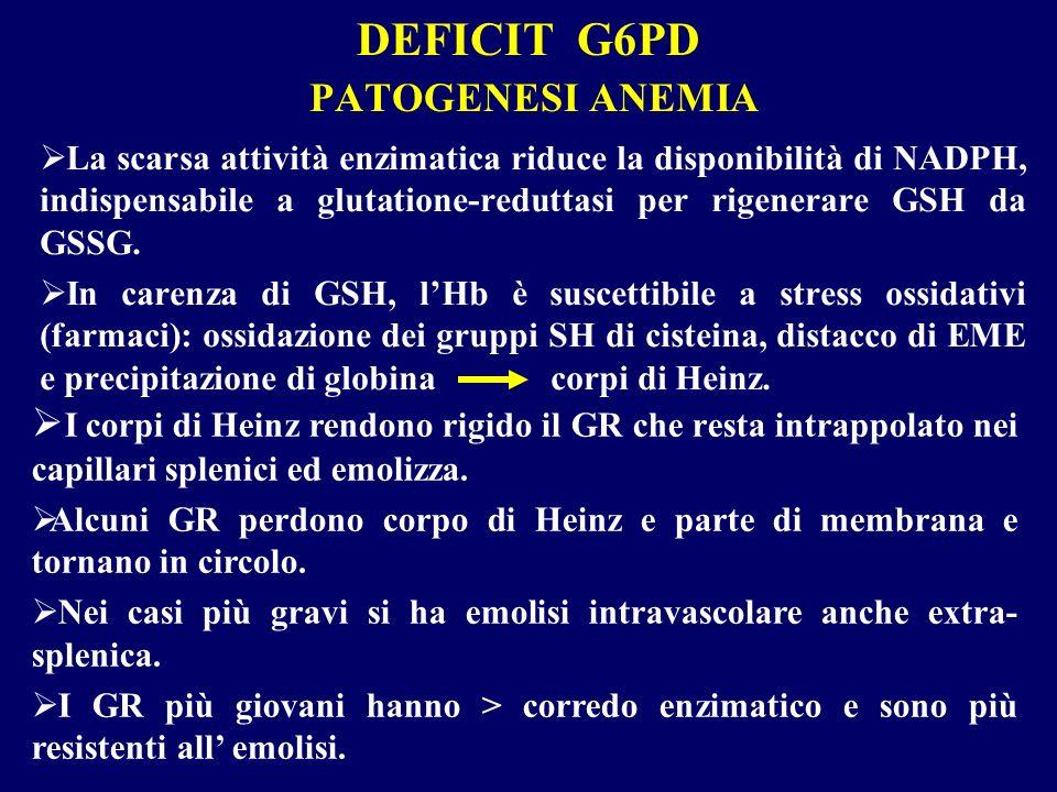 DEFICIT G6PD PATOGENESI ANEMIA La scarsa attività enzimatica riduce la disponibilità di NADPH, indispensabile a glutatione-reduttasi per rigenerare GS