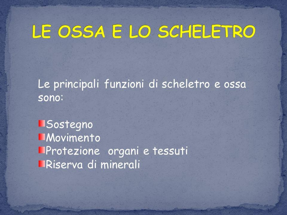 Le principali funzioni di scheletro e ossa sono: Sostegno Movimento Protezione organi e tessuti Riserva di minerali