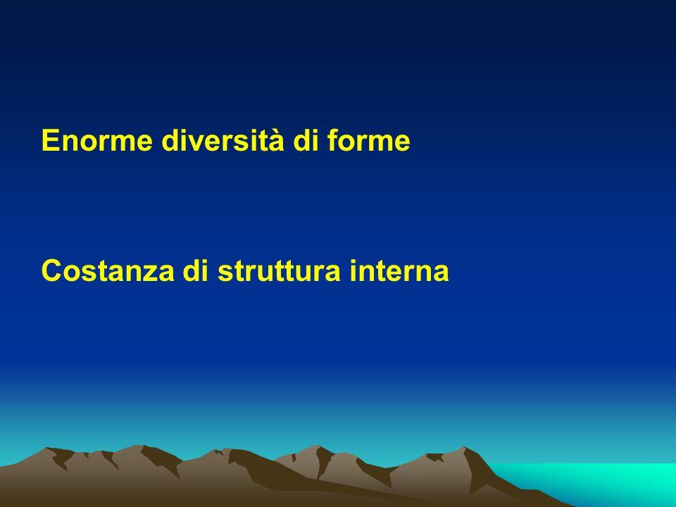 Enorme diversità di forme Costanza di struttura interna