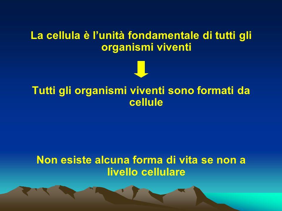 La cellula è lunità fondamentale di tutti gli organismi viventi Tutti gli organismi viventi sono formati da cellule Non esiste alcuna forma di vita se
