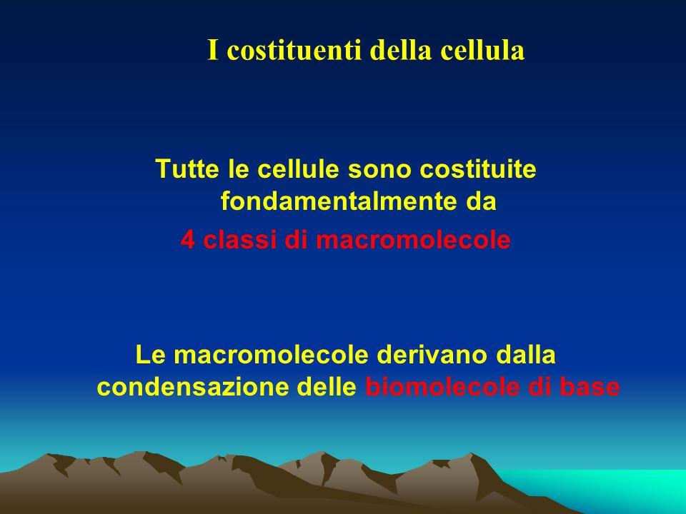Tutte le cellule sono costituite fondamentalmente da 4 classi di macromolecole Le macromolecole derivano dalla condensazione delle biomolecole di base