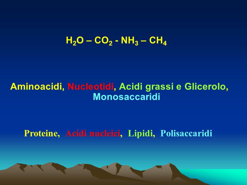 H 2 O – CO 2 - NH 3 – CH 4 Aminoacidi, Nucleotidi, Acidi grassi e Glicerolo, Monosaccaridi Proteine, Acidi nucleici, Lipidi, Polisaccaridi