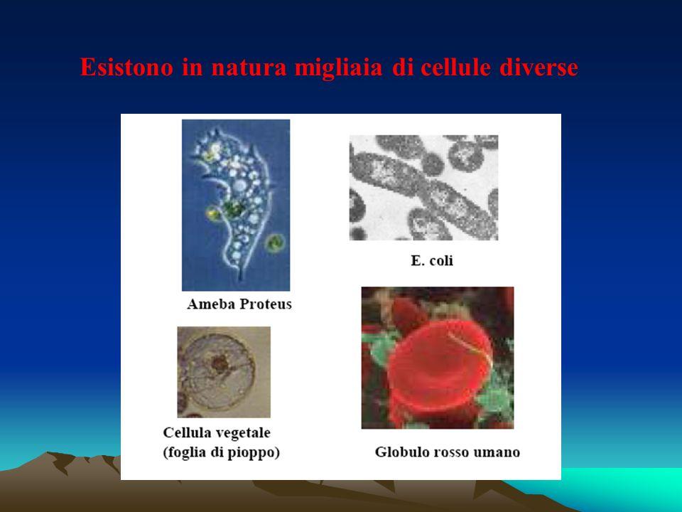 Esistono in natura migliaia di cellule diverse