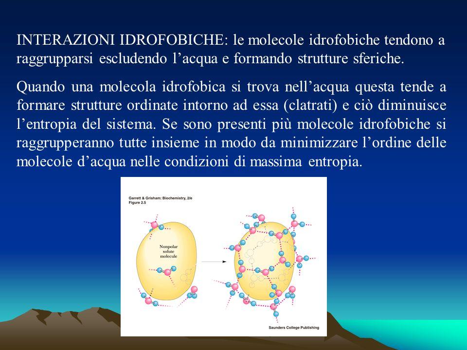 INTERAZIONI IDROFOBICHE: le molecole idrofobiche tendono a raggrupparsi escludendo lacqua e formando strutture sferiche. Quando una molecola idrofobic