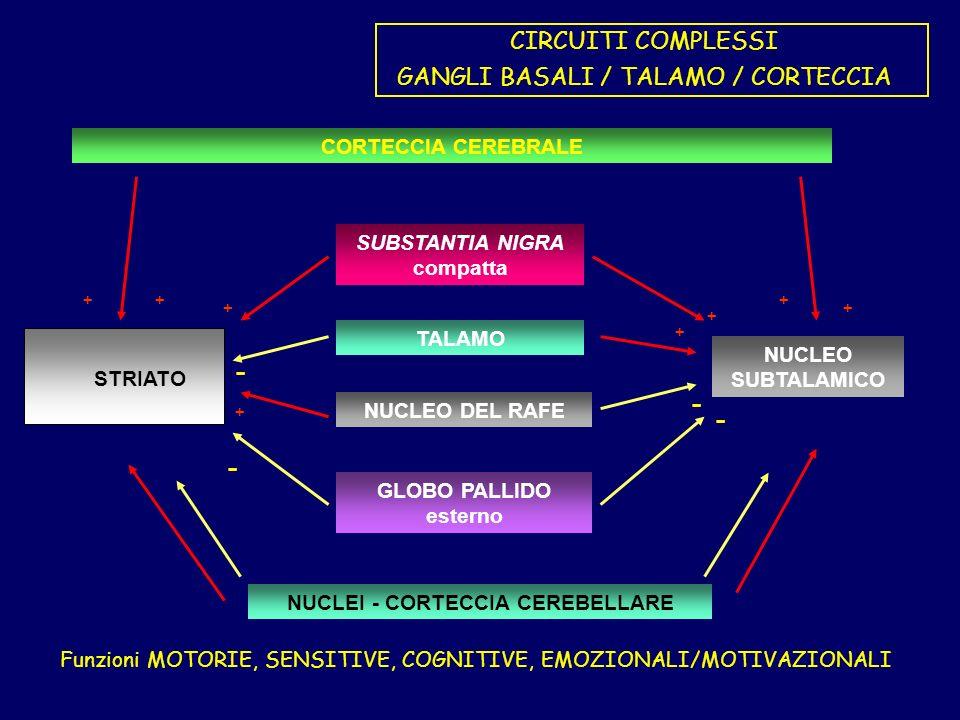 CIRCUITI COMPLESSI GANGLI BASALI / TALAMO / CORTECCIA GLOBO PALLIDO esterno TALAMO SUBSTANTIA NIGRA compatta NUCLEO DEL RAFE NUCLEO SUBTALAMICO STRIATO CORTECCIA CEREBRALE +++ ++ + + + - - - - NUCLEI - CORTECCIA CEREBELLARE Funzioni MOTORIE, SENSITIVE, COGNITIVE, EMOZIONALI/MOTIVAZIONALI