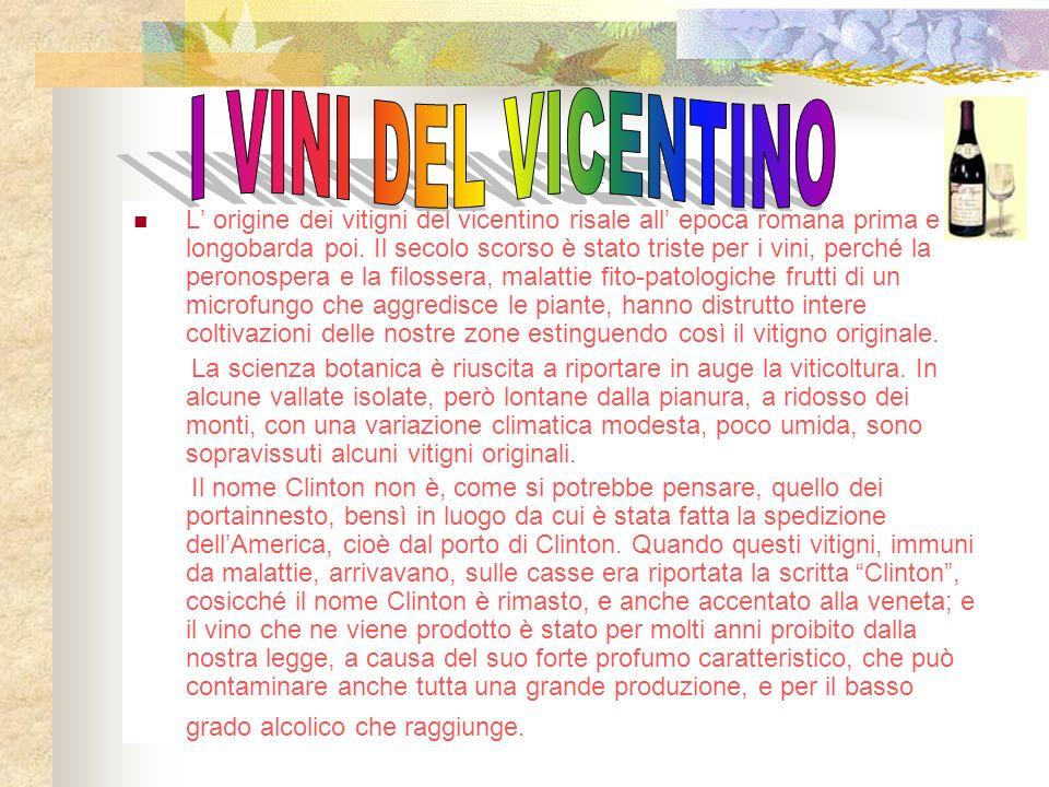 L origine dei vitigni del vicentino risale all epoca romana prima e longobarda poi.