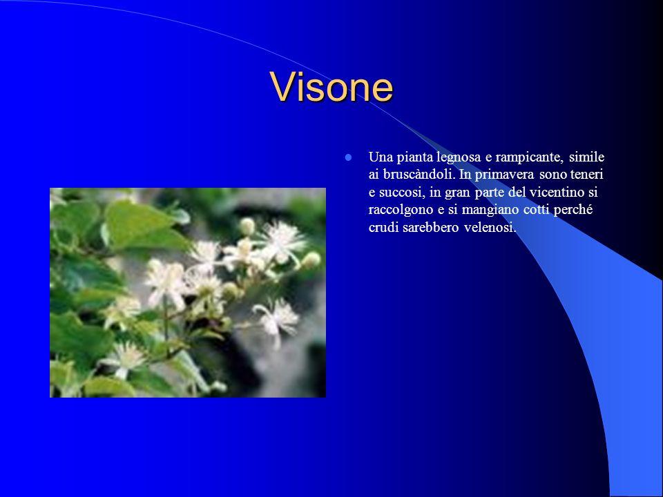 Visone Una pianta legnosa e rampicante, simile ai bruscàndoli.