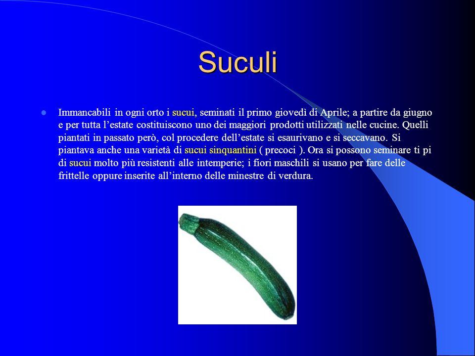Suculi Immancabili in ogni orto i sucui, seminati il primo giovedì di Aprile; a partire da giugno e per tutta lestate costituiscono uno dei maggiori prodotti utilizzati nelle cucine.