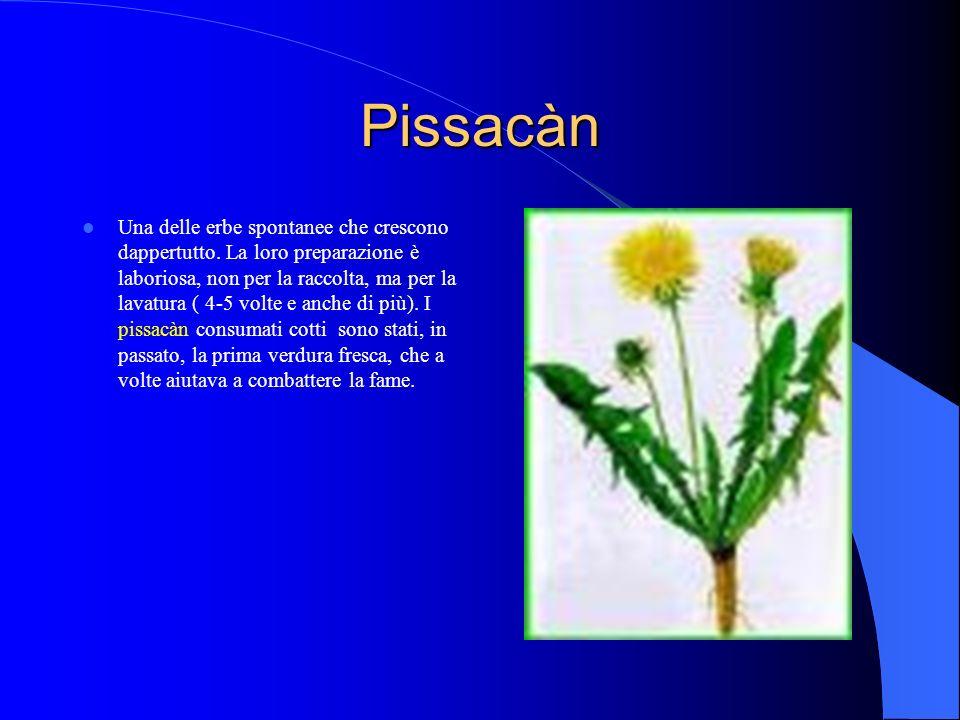Pissacàn Una delle erbe spontanee che crescono dappertutto.