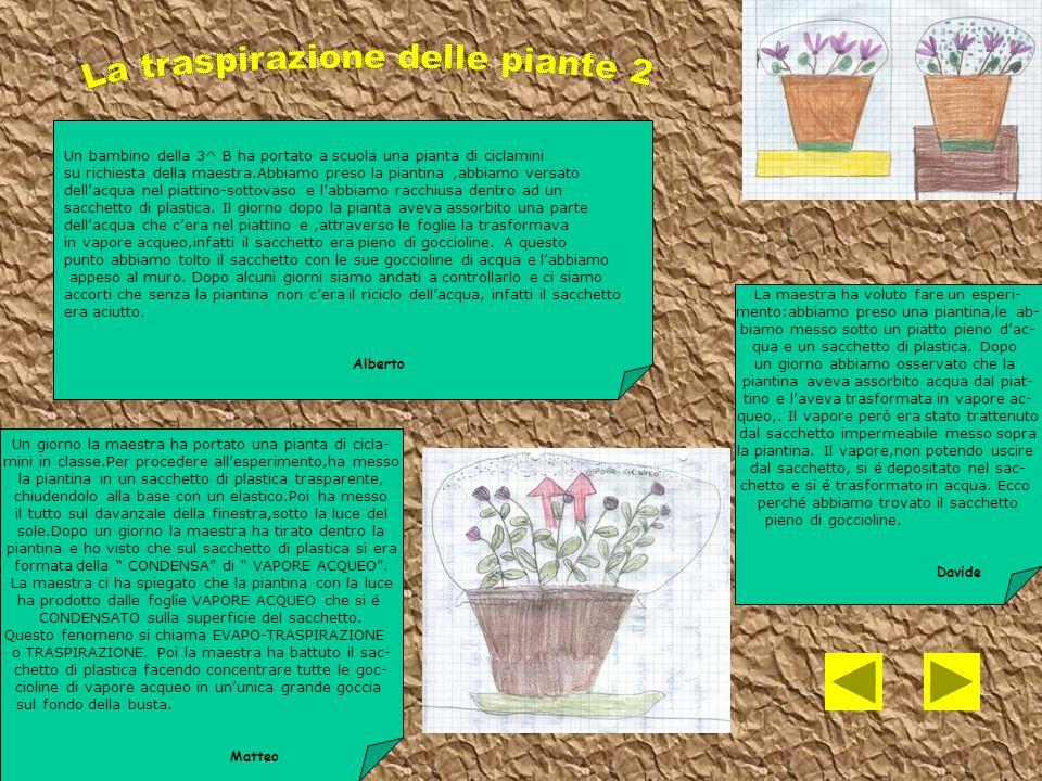Con la mia classe e la mia maestra di scienze abbiamo fatto un esperimento con una pianta.