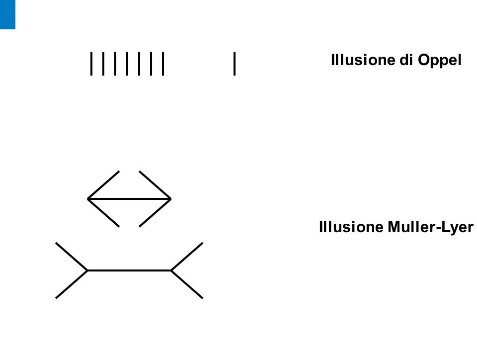 Illusione di Oppel Illusione Muller-Lyer
