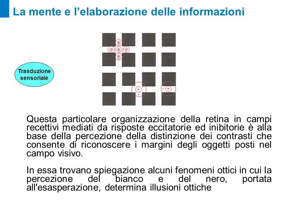 La mente e lelaborazione delle informazioni Questa particolare organizzazione della retina in campi recettivi mediati da risposte eccitatorie ed inibi